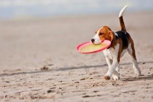 Μιλτιάδης Βαρβιτσιώτης, δεσποζόμενα ζώα, νομοθετική ρύθμιση, πρόσβαση, παραλίες