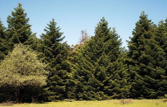 Πάρνηθα,ΕΔΑΣΑ,δάσος,αναδάσωση