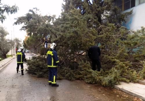 άνεμοι, καταστροφές, δήμος Φυλής, ξερίζωσε δέντρα, στέγη, κλειστό, γυμναστήριο, Αγίου Νικολάου