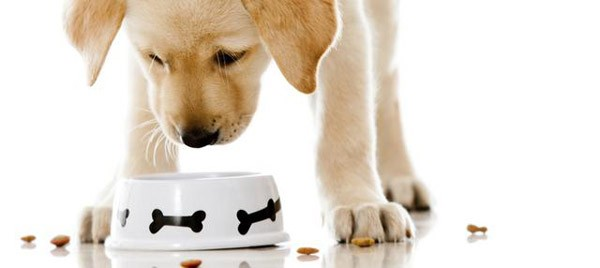 σκύλος, διατροφή, ξηρά τροφή, petshop pets & friends