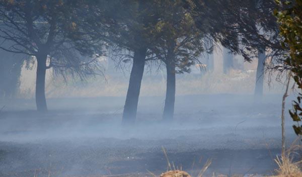 φωτιά, Πολεοδομία, χωράφι, Άνω Λιόσια, δήμος Φυλής