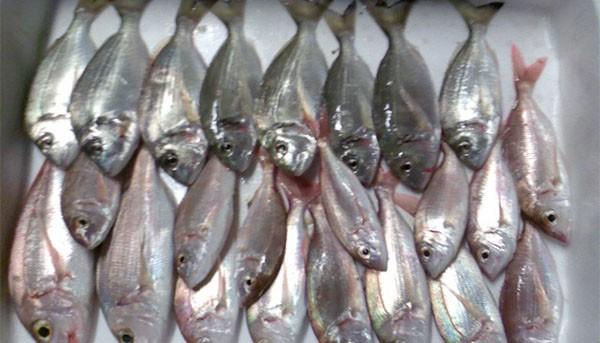διανομή, ψαριών, ψάρια, Κοινωνικό Παντοπωλείο, δήμου Φυλής