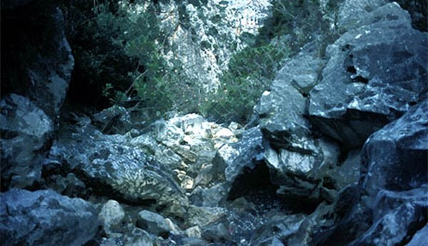 ρέματος Γιαννούλας, 'Ανω Λιόσια, Φυλή, δήμος Φυλής