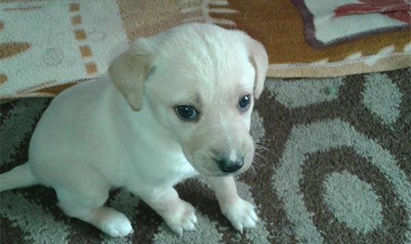 σκυλάκια, υιοθεσία, Άνω Λιόσια