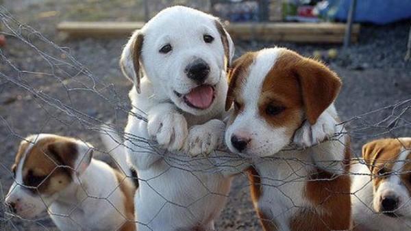 Υπεγράφη η ΚΥΑ χρηματοδότησης Δήμων και Σύνδεσμων Δήμων για λειτουργία καταφυγίων και ιατρείων αδέσποτων ζώων