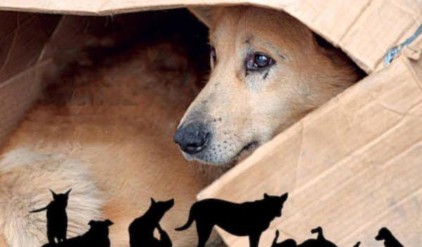 καταφύγια αδέσποτων ζώων συντροφιάς