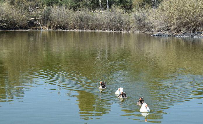 Φιλί«ζωής» στο Πάρκο Τρίτση δίνει η υδροδότησή του από το πηγάδι Πρέση του Δήμου Ιλίου